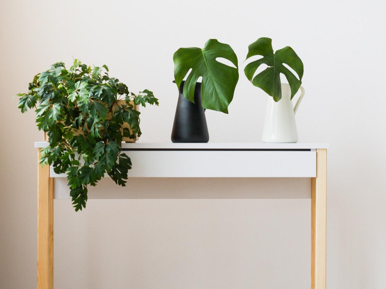 Pflanzen auf einem Beistelltisch - Fensterblatt als Bad Deko