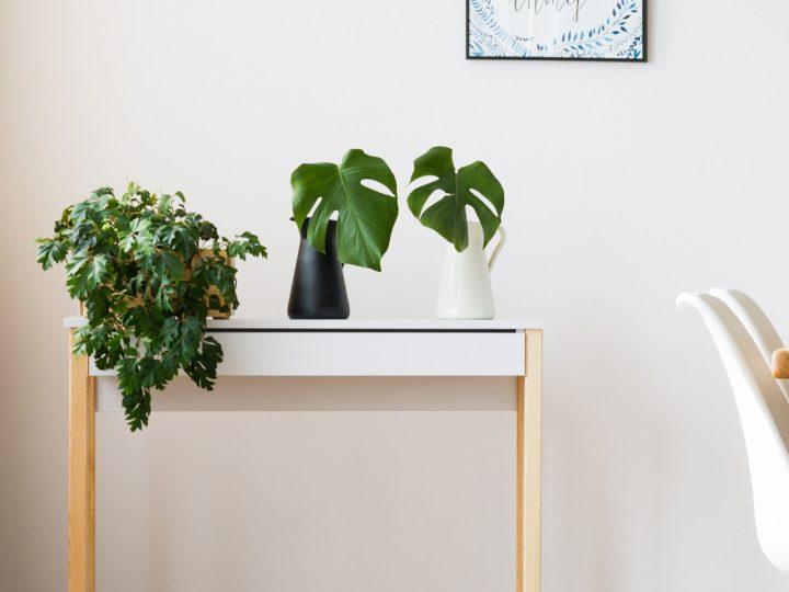 Zimmerpflanzen auf Beistelltisch im Skandinavischen Stil