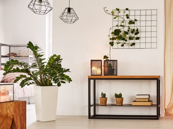 Zimmerpflanzen Gummibaum und Rankpflanze