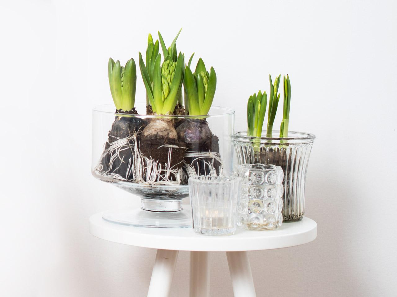 Osterdekoration minimalistische Glasblumentöpfe